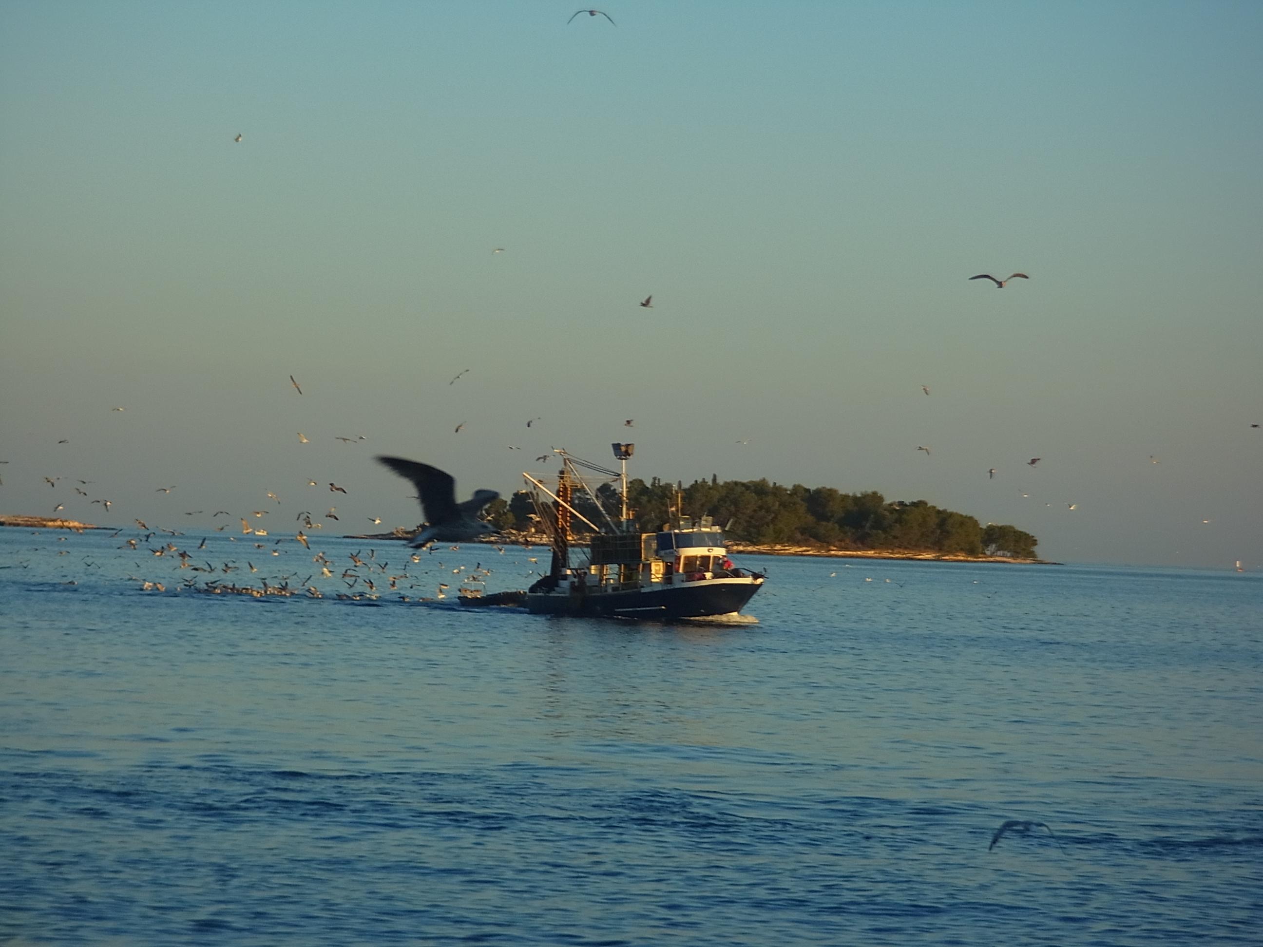 Ein Fischerboot bringt ausser Fisch auch Geflügel mit
