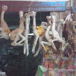 Lamaföten zum Verkauf auf dem Hexenmarkt