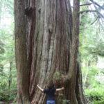 ...und Juli den großen Baum.
