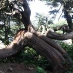Wunderbaum 2