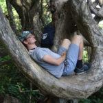 Baumhängematte
